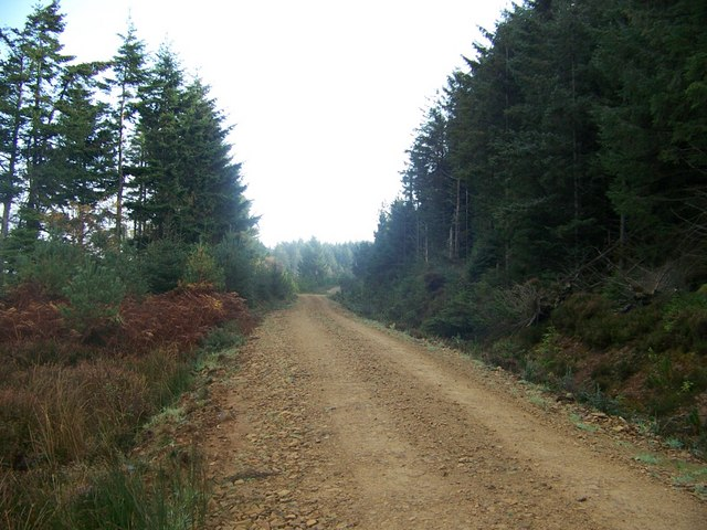 Forestry road above Lamlash