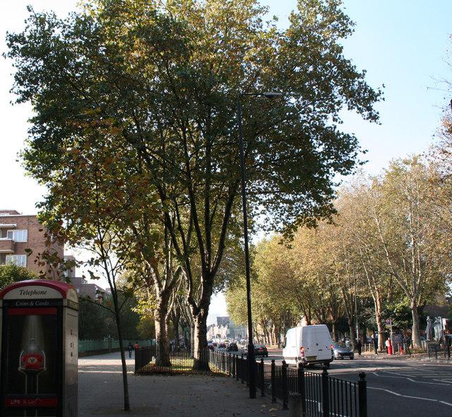 London Planes, Mile End Road