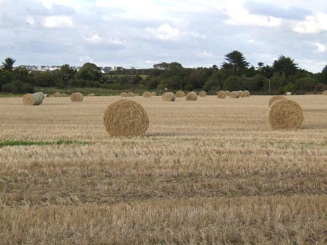 Strawbales near Rosslare