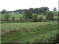 SJ9553 : Grazing Land near Denford, Staffordshire by Roger  Kidd