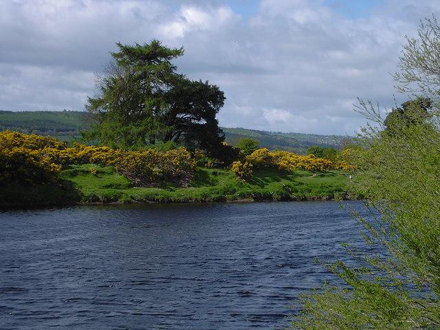 Corbridge - Gorse on south bank of River Tyne