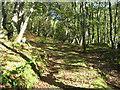 SH6841 : Woodland path at Pont Tal y Bont by David M Jones