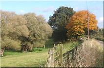 TM1057 : Trees by lane near Woolney Hall by Andrew Hill
