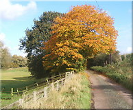 TM1057 : Lane and two trees, near Woolney Hall by Andrew Hill