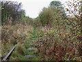 SJ9151 : Disused Railway, Stockton Brook, Staffordshire by Roger  Kidd