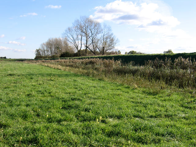 Woodwalton Fen Nature Reserve, Wood Walton, Cambs