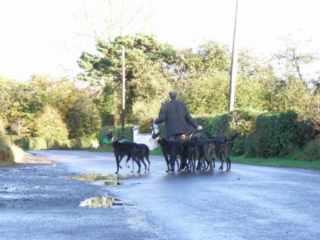 Dog Walking in Churchtown, Co. Meath