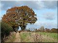 SO6590 : Track and Public Footpath, near Chetton, Shropshire by Roger  Kidd