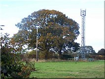 SJ5723 : Radio Mast Near Stanton-upon-Hine-Heath by Geoff Pick