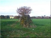 SJ5723 : Hedgerow Near Stanton-Upon-Hine-Heath by Geoff Pick