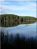 NH9718 : Loch Garten by F Leask
