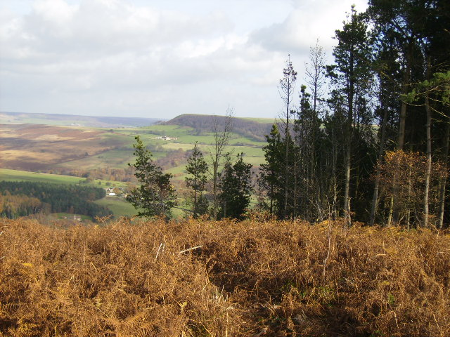 View over bracken in Cowhouse Bank Wood
