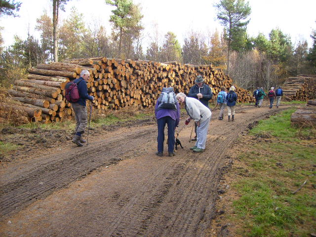 Logging operations in Baxton's Wood