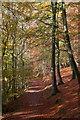 SO4566 : Woodland path by Debbie Wingfield