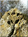 SP2930 : Rollright Stones close-up, Oxfordshire by Brian Robert Marshall