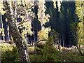 NH8505 : Woodland by sylvia duckworth