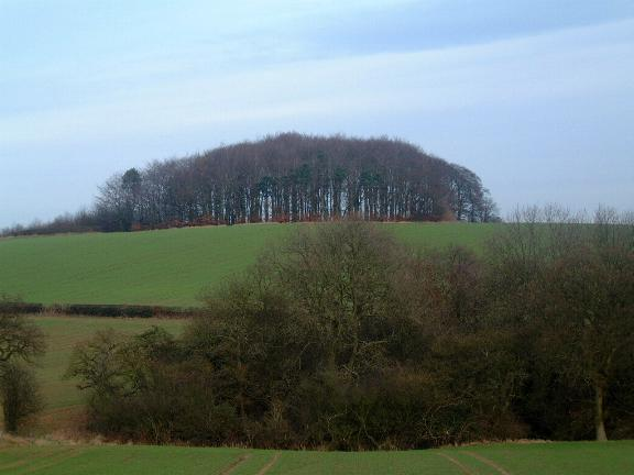 Frankley Beeches