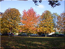 TL4658 : Autumn colours on St Matthews Piece by Keith Edkins