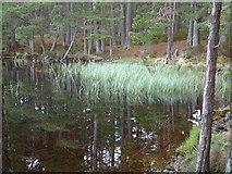 NH9617 : Loch Mallachie by sylvia duckworth