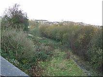 NS2875 : Former Princes Pier railway line by Thomas Nugent