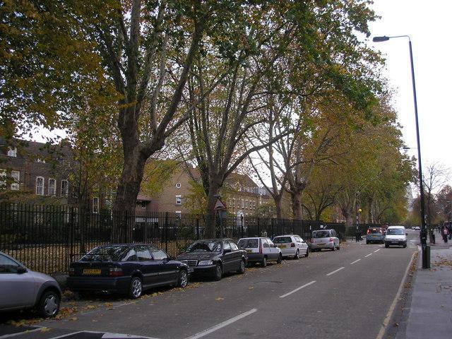 Plane Trees, Stepney Green, East London