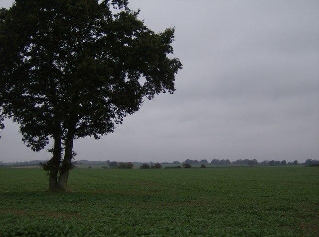 Farmland south of Church Farm