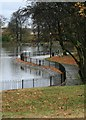 NZ4919 : West Bank of the Lower Lake, Albert Park by Mick Garratt