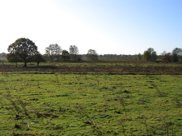 Pasture below Sandy Plantation, Brandon, Suffolk