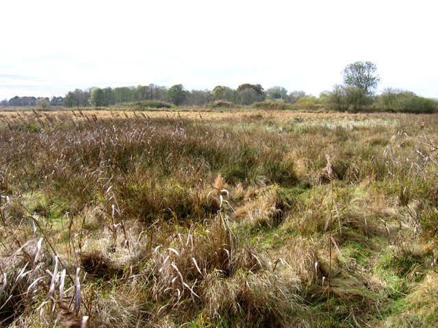 Wangford Fen, Wangford, Suffolk