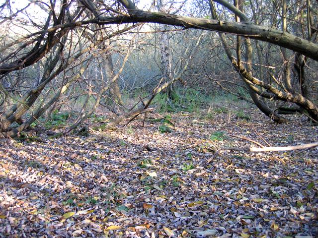 Willow carr, Brandon, Suffolk