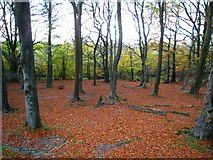 J4576 : In Cairn Wood [5] by Rossographer