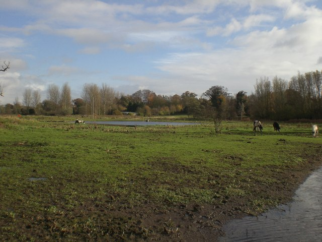 Horses grazing on Bowthorpe Southern Park