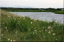 NT4681 : Marl Loch by Mick Garratt