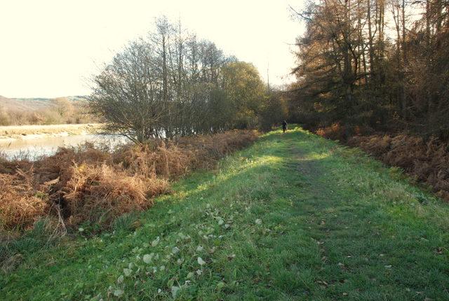 The edge of Roudsea Wood