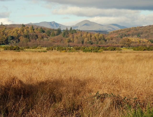 Dried grassland on the banks of the river Leven