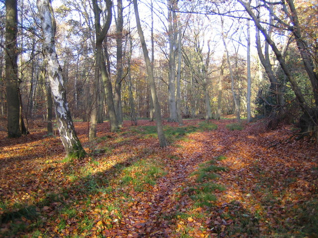 Wexham Street: Rowley Wood