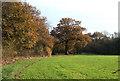 SO6786 : Cropfield by Woodland, near Overton, Shropshire by Roger  Kidd