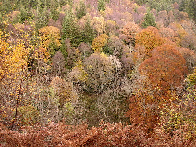 Autumn at Harsondale Cleugh