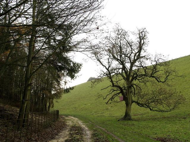 Oxlands Dale Footpath