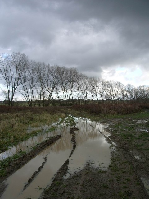 Muddy track and trees at Highstreet, near Yorkletts