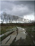 TR0862 : Muddy track and trees at Highstreet, near Yorkletts by pam fray