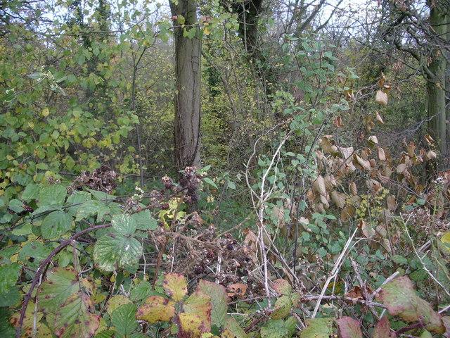 Coombe Wood, Yorkletts