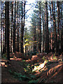 TG2726 : A woodland path by Evelyn Simak