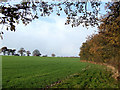 SO6787 : Crop Field by Copse, Middleton Scriven, Shropshire by Roger  Kidd