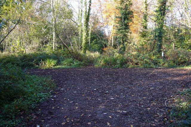 Junction of footpaths in Walks Brake wood