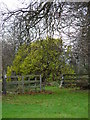 TA3719 : Mulberry Tree - Skeffling - 2007.11.24 by JFR