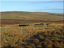 NY6640 : Sheepfold above Aglionby Beck by Andrew Smith