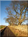 NZ0487 : The road from Rothley Mill by Oliver Dixon