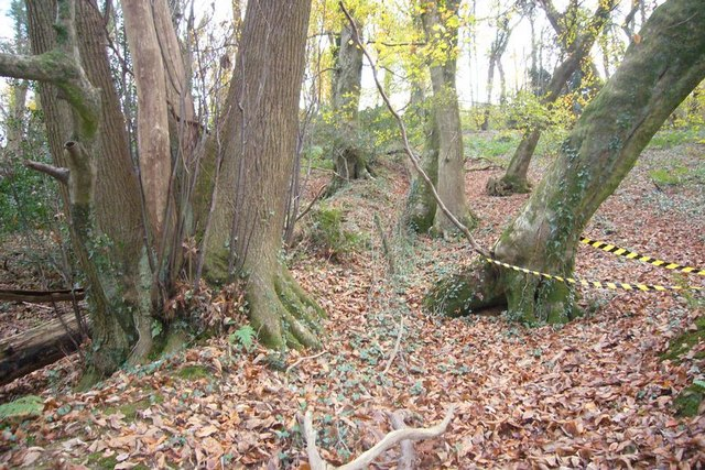 Ancient hedgebank in Chaddlewood
