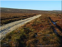 NY6738 : Track above Rowting Burn by Andrew Smith